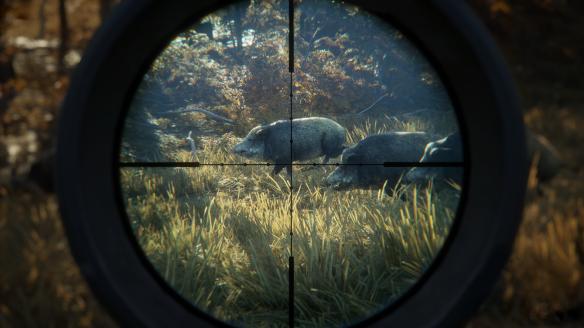 theHunter_screenshot-wild-boars-scope